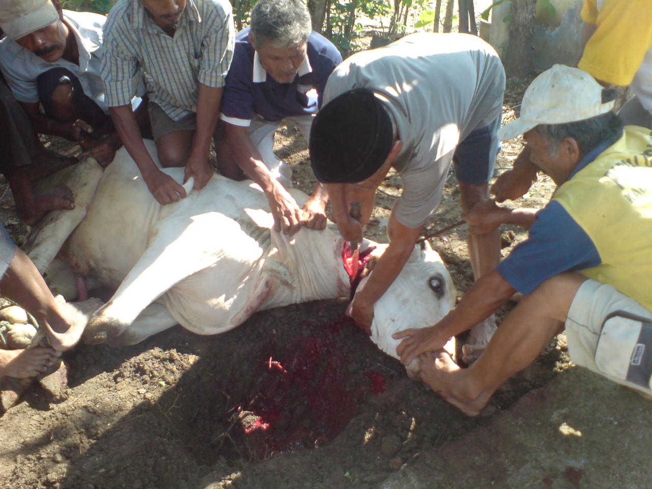 03 #Ieduladha #karangmojob #indonesiabanget