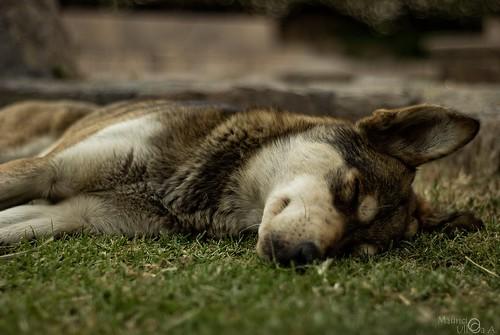 Just a Little Nap.