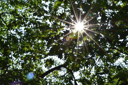 Sunburst through the Trees - Westmount Park, Montreal