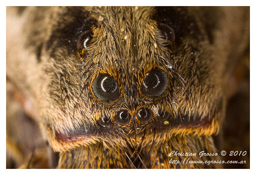"""Araña • <a style=""""font-size:0.8em;"""" href=""""http://www.flickr.com/photos/20681585@N05/4517721123/"""" target=""""_blank"""">View on Flickr</a>"""