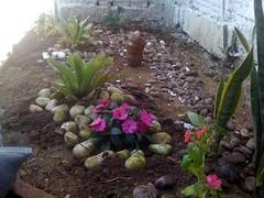 E nasce mais um jardim...