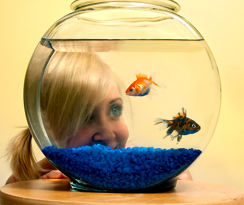 Little fish, little fish swimming in the water