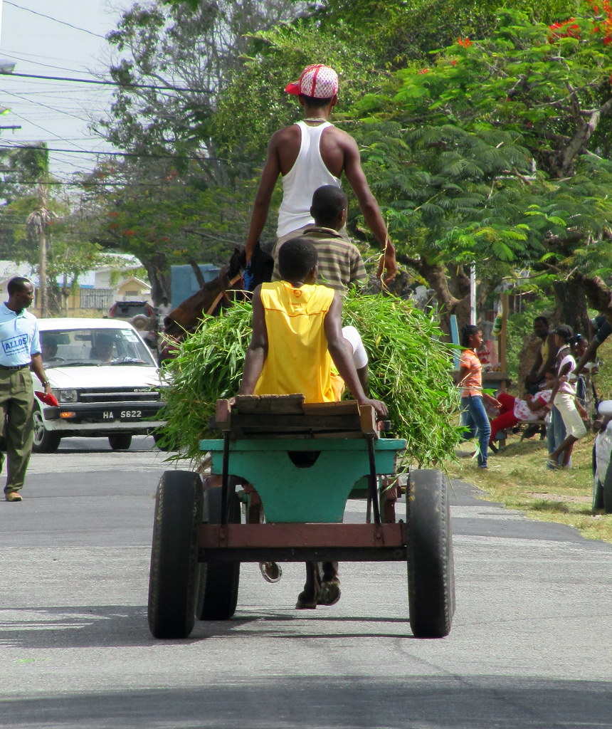 Donkey cart, Georgetown, Guyana