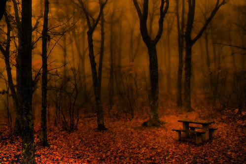 The Table of the Misty Wood