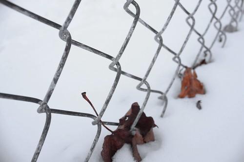 Winter's Folly