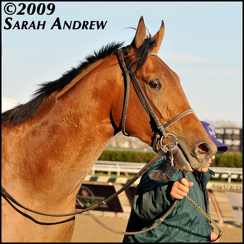 Buddy's Saint: Winner of the 2009 Remsen Stakes