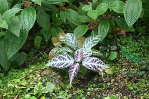 20090919 Edinburgh 20 Royal Botanic Garden 110