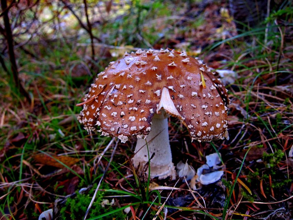 Spiky Mushroom