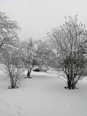 Snow Day Dallas,TX      02-11-10
