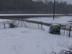 snowDay_02_12_10 010