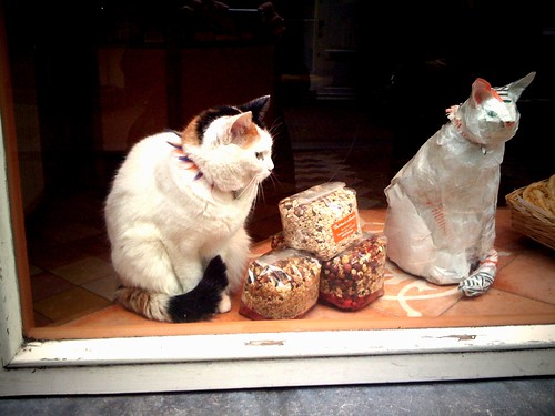 Two cats, Amsterdam shop window