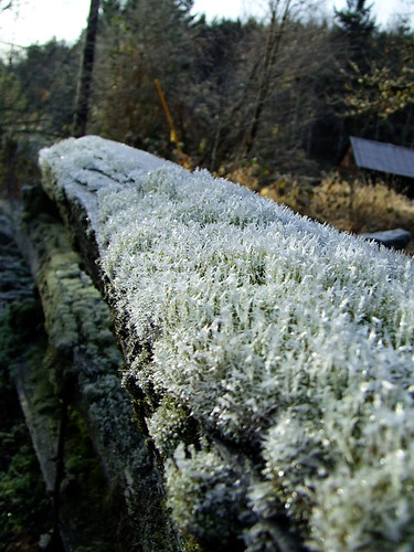 Frost Covered Railing