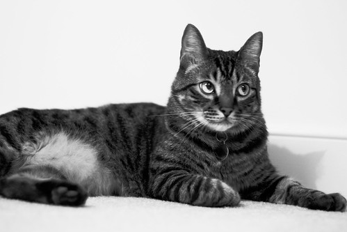 Alton in black and white