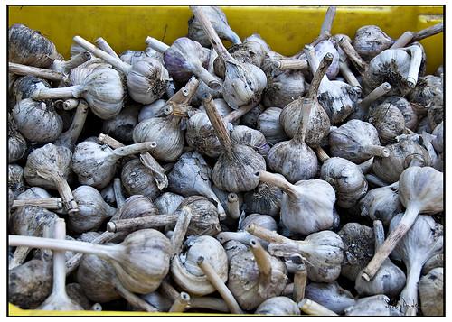 Farmers Market Garlic