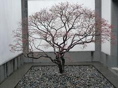 Architektur und Natur in perfekter Harmonie, Suzhou Museum
