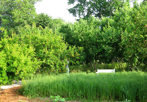 Williamsburg gardens