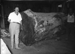 la storia della piandoro legnami