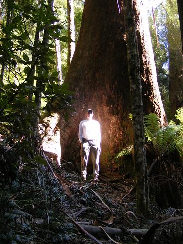 Backdropped by a mountain ash tree