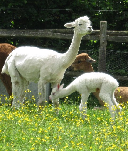 mum and cria