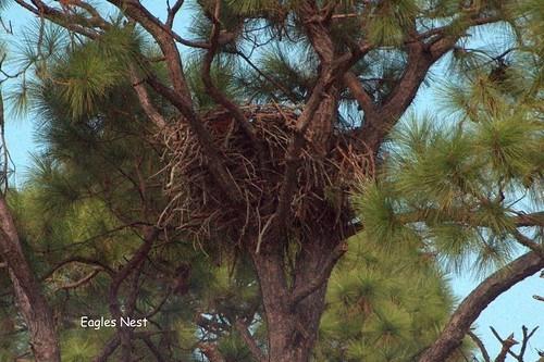 Eagles' nest