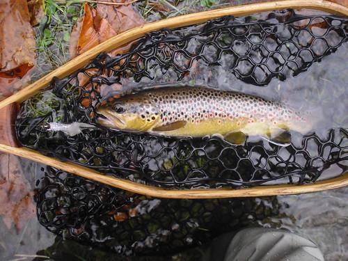 Streamer Brown In Net