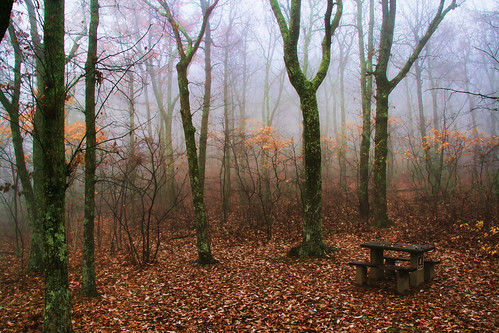 The Table in the Wood