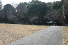 四季の森公園「さくらの谷」(Cherry valley at Shikinomori park, Japan)