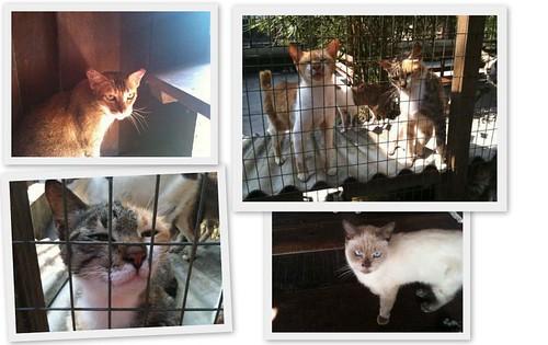 Noahs Ark Cats2