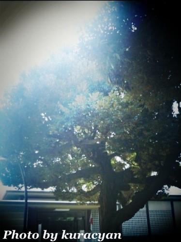 上野公園3