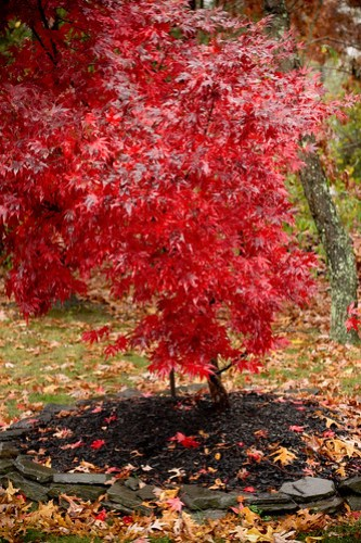 red tree (1 of 1)