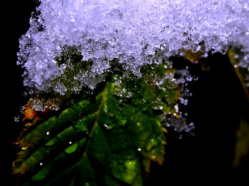 Leaf & Snow