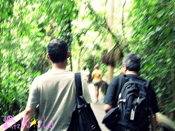 OrangUtan@Sepilok (12)