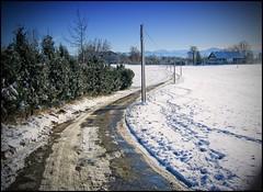 Allgaeu 2010 Januar Schnee 6