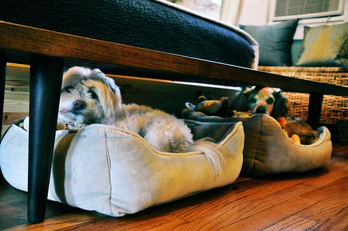 Under the bed dog beds