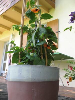 Garten_22.05.11_009_klein