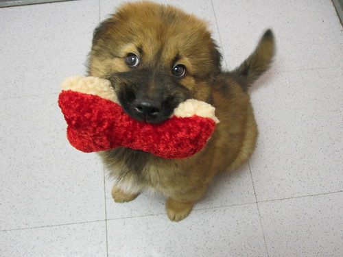i got the toy! i got the toy!