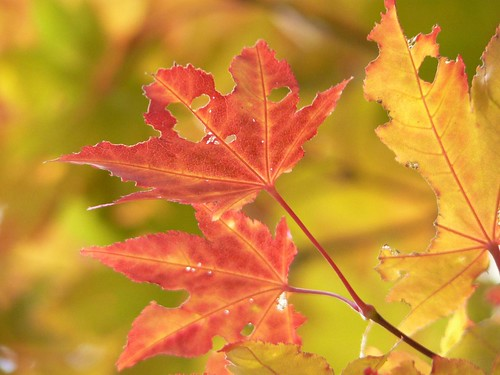 Kanayama Fall Colors
