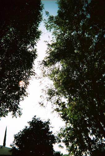 bbf - backyard trees