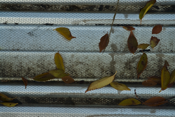 leaves on metal