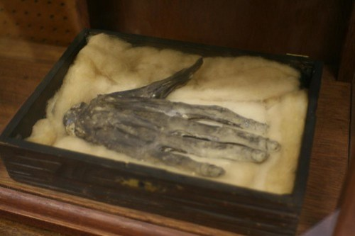 Hand of Glory, Whitby Museum