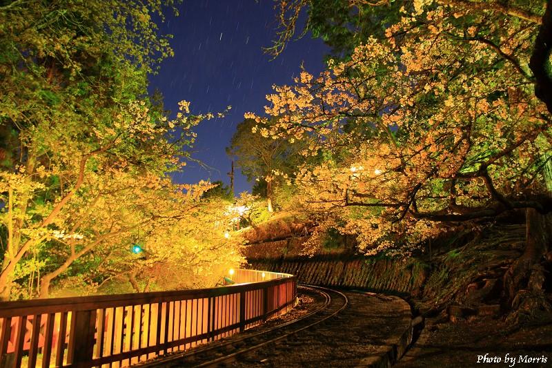 03A 阿里山夜櫻