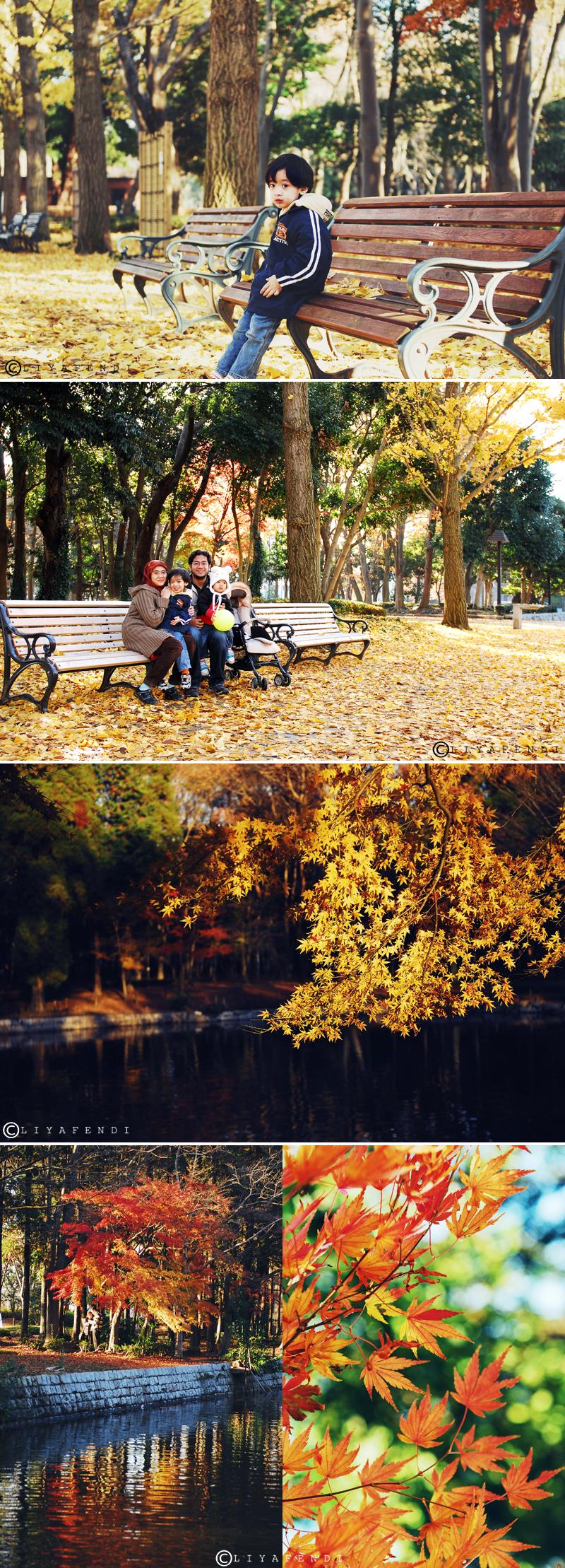 Doho Park- Autumn 2009