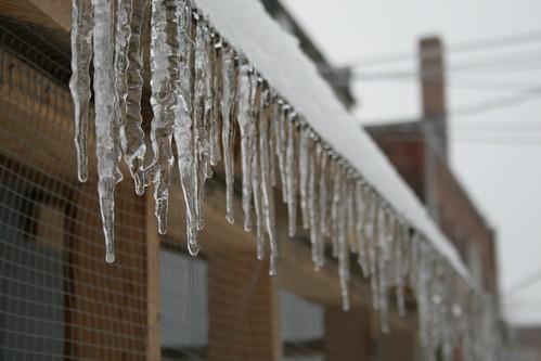 Ice storm :: coop