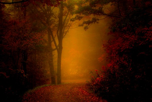Path through the Autumn Mist