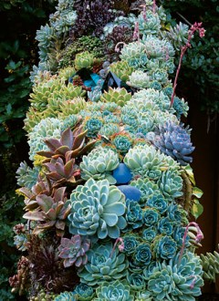 succulents Martha Stewart Living
