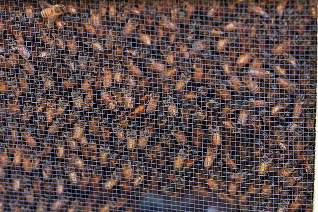 Box o' bees