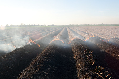 Burning Cane Field