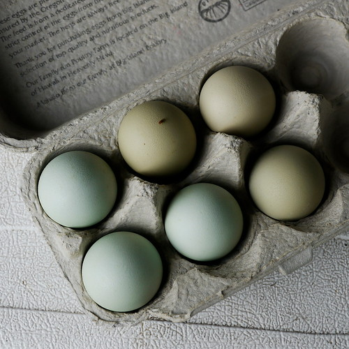 Eggses!