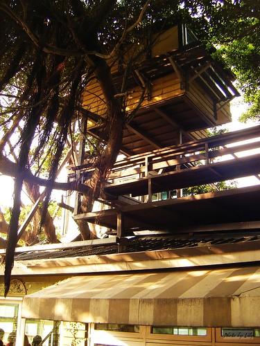 有三層樓高的樹屋,很穩固喔!站上去視野很好。