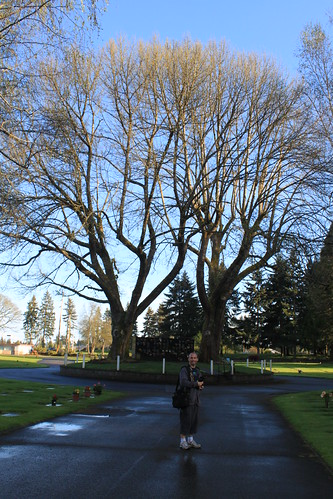 Tumwater Washington American Chestnuts - Ryan and Chestnuts